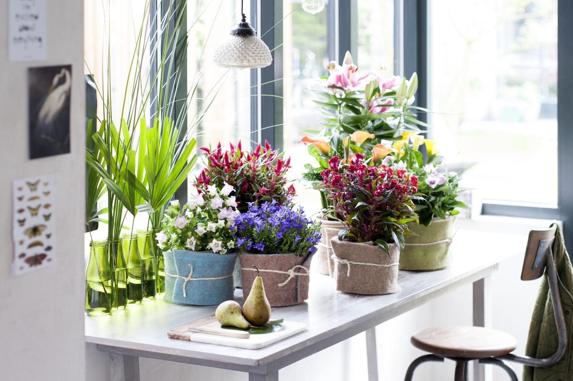 Binnenstebuiten-planten-05-2017-05 - kopie - kopie
